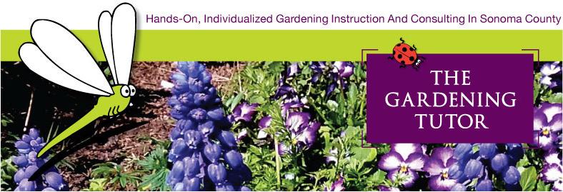 Pansy-and-Grape-Hyacinth