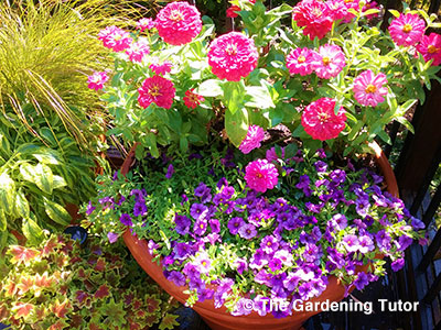 Postcard-March-Container-Gardening