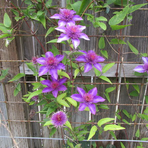 Planting Suggestions 1203